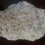 قیمت عمده فروش صدف معدنی مرغوب گلستان