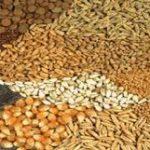 مزیت کاربرد صدف معدنی در تهیه خوراک دام