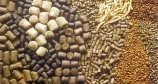 اهمیت مصرف پودر صدف معدنی در خوراک دامی