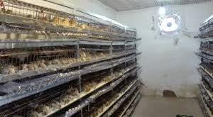 شرکت تولیدی پودر صدف مناسب معدنی برای پرورش