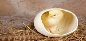 تخم گذار