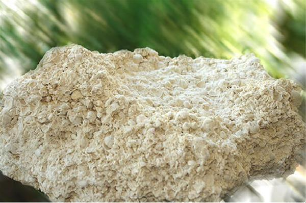 فروش پودر صدف کوهیمشاوره و فروش صدف معدنی و نقش آن در تامین کلسیم