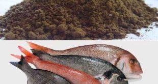 پودر ماهی خالص جنوب