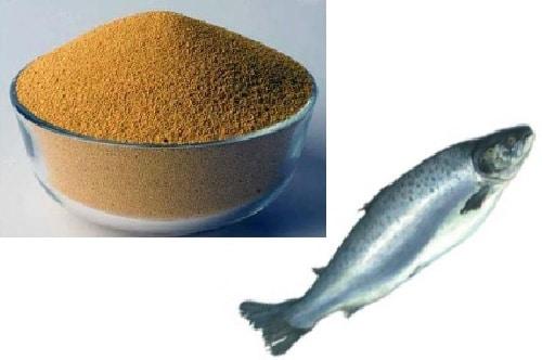 پودر استخوان ماهی شمال